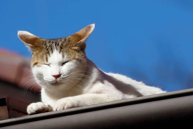 屋根に雨樋が必要なワケ【実は外壁を守っている!?】