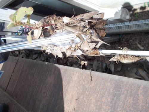 雨樋に詰まった枯葉や土を手作業で取り除く様子