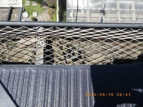 雨樋の防護ネット(別の写真)