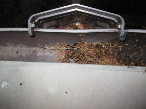 落ちてきた枯葉で雨樋が詰まった状態(真上からの撮影)