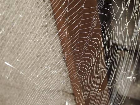 蜘蛛の巣撤去
