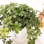 出窓に飾る観葉植物はサイズと育てやすさがポイント