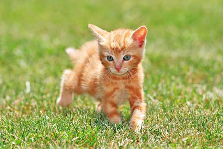 外を走る猫