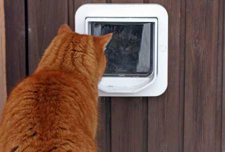 猫ドアの前にいる猫