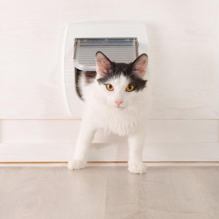 猫ドアの取り付け