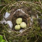 取扱注意!鳥の巣の正しい撤去方法と概要費用