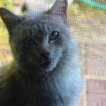 網戸を猫から守る方法とは?|愛猫家のお悩み解決