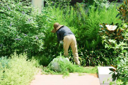 庭の手入れ