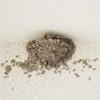 鳥の巣撤去アイキャッチ画像