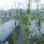 窓やサッシのカビはこうして発生する!除去・予防策まで伝授