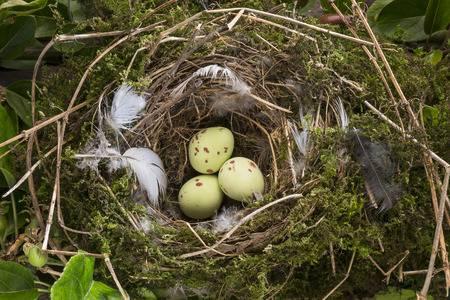 取扱注意!鳥の巣の正しい撤去方...