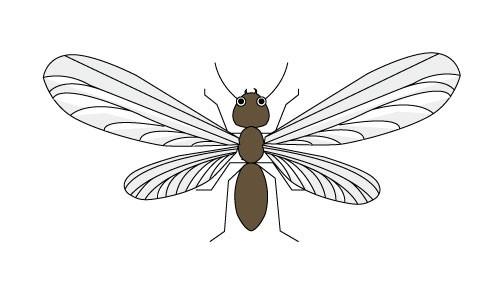 黒アリの羽アリ