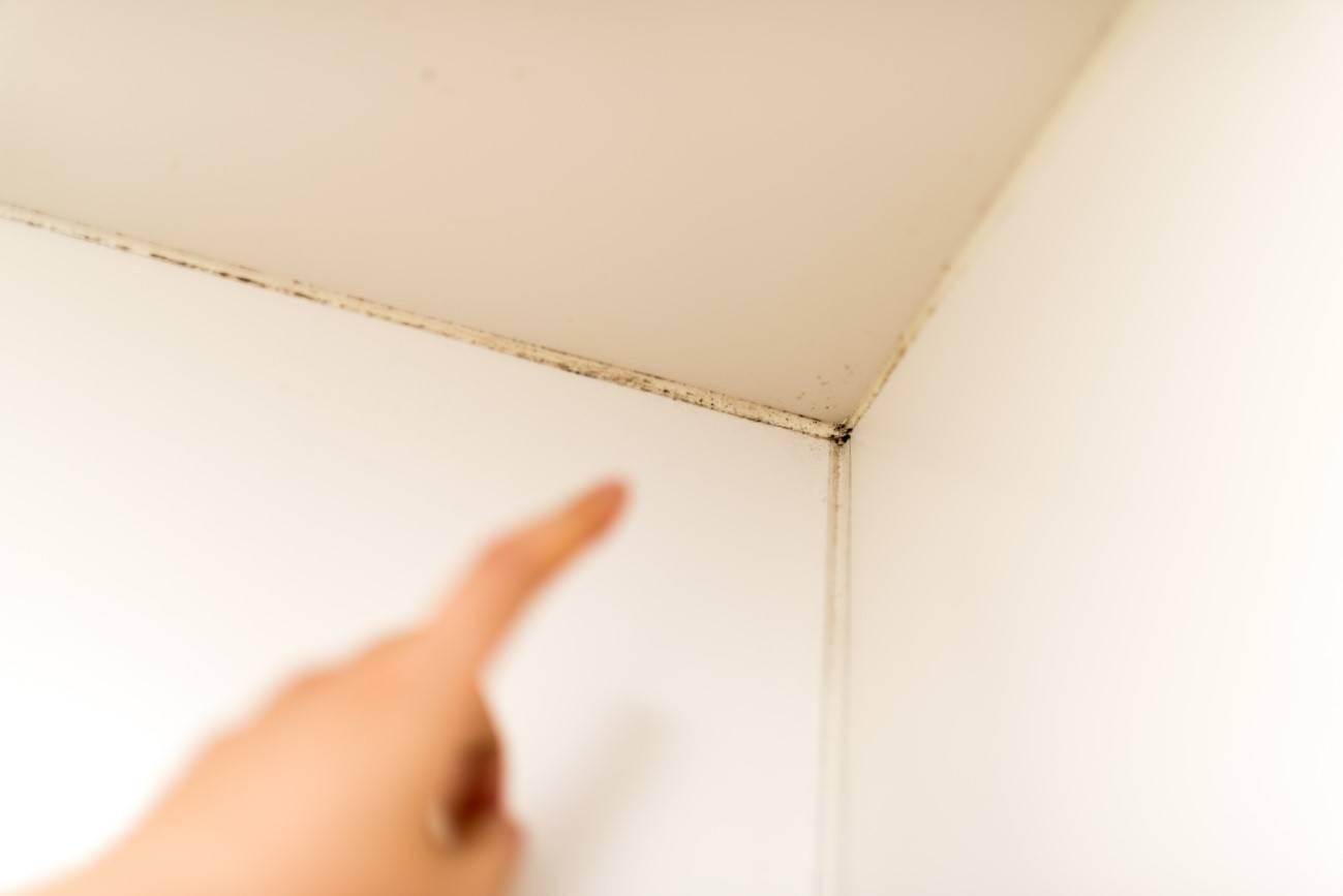 繰り返す天井のカビ 原因から予防まで丸ごと解説 イエコマ
