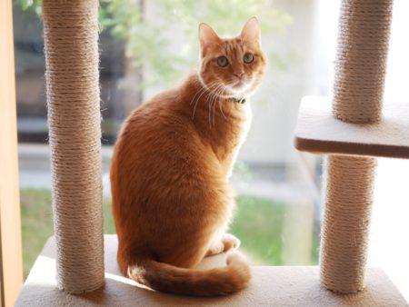 キャットタワーに猫