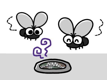 排水口と虫