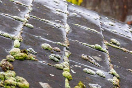 カビ苔屋根